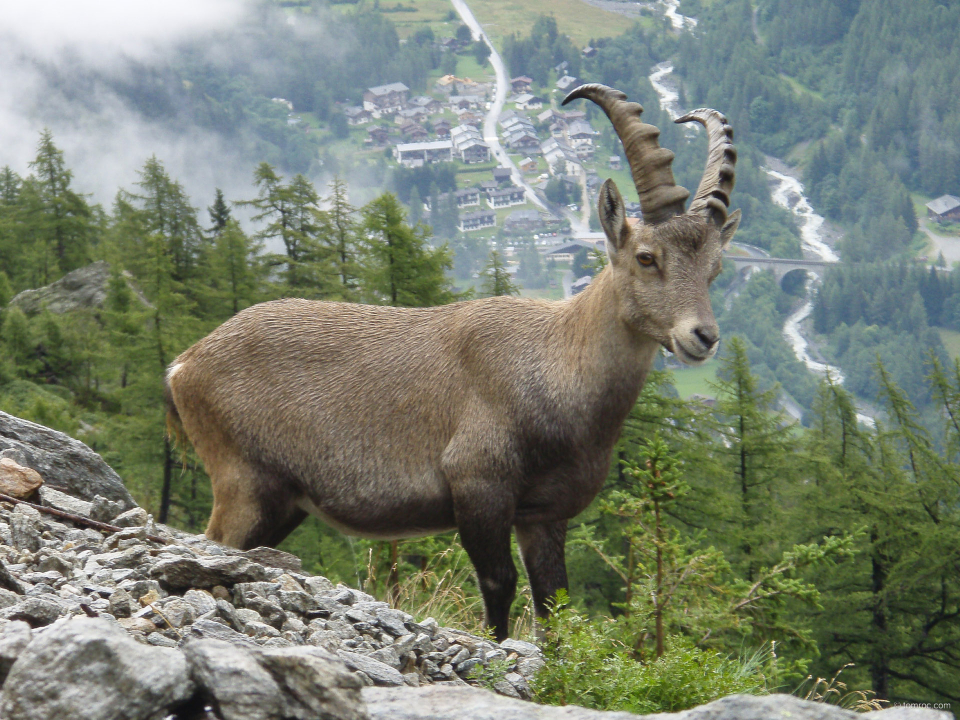 Rencontre sur le Tour du Mont Blanc, proche des Aiguilles Rouges.