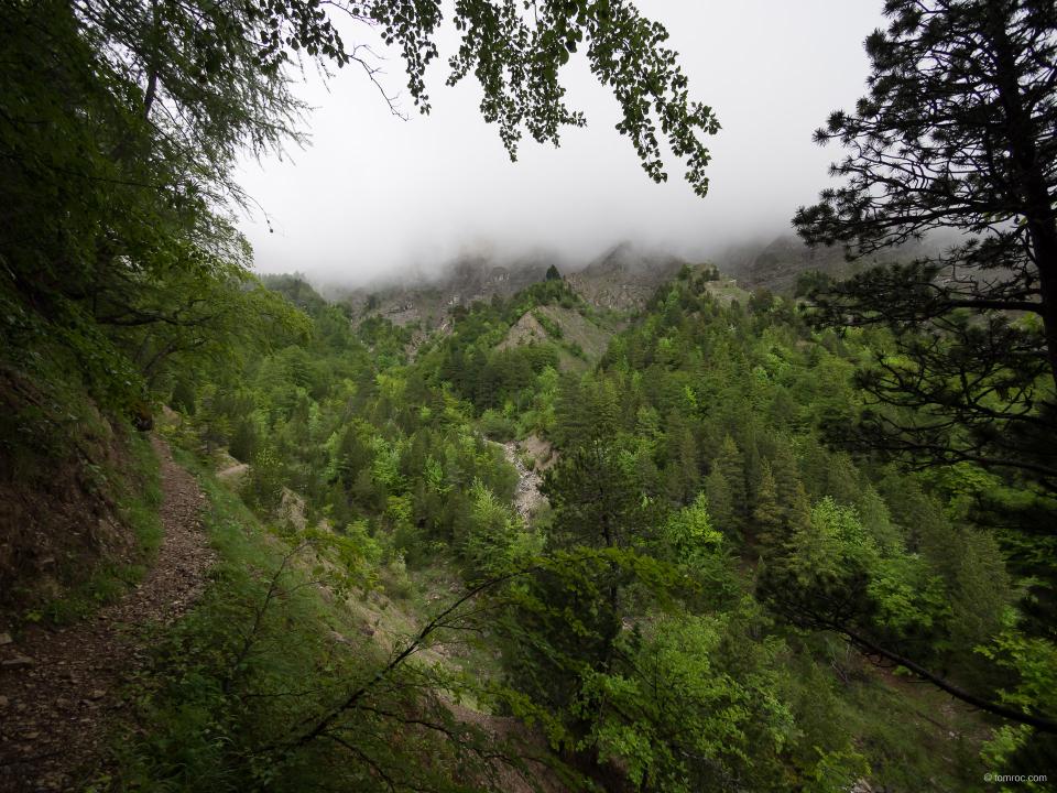 Sente et brouillard